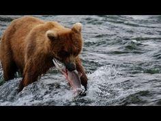 Alaska - Uncharted Waters - Canon 5D Mark III: http://www.youtube.com/user/devinsupertramp