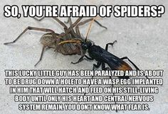 And...still don't like spiders.