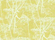 Cow Parsley (66/7051) - Cole & Son Wallpapers - A large scale all over design of cow-parsley – in the off white on citrus background – giving a magical delicate effect. Available in other colours – please ask for a sample for a true colour match. Paste-the-wall products.