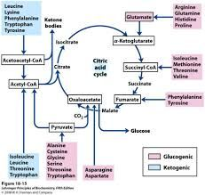 Amino Acid Therapy Chart  Google Search  Mind Matters