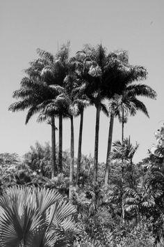"""Photographie noir et blanc """"les cocotiers"""" martinique, mai 2015 : Photos par bog-art"""