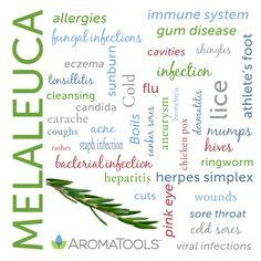 Melaleuca (AKA Tea Tree Oil) try #doterra