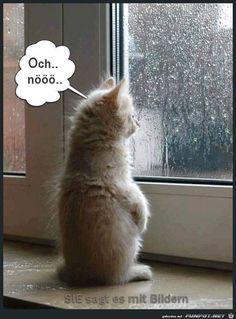 lustiges Bild 'Katze am Fenster.jpg'- Eine von 1501 Dateien in der Kategorie 'guten-Morgen-Bilder' auf FUNPOT.