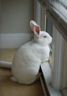 """The Easter Bunny, pictured earlier today"" Animals Images, Animals And Pets, Baby Animals, Cute Animals, Animal Pictures, Cute Baby Bunnies, Funny Bunnies, Cute Babies, Beautiful Rabbit"