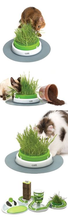 60 Best Cat Grass And Loose Catnip 177785 Images Cat Grass Catnip Grass