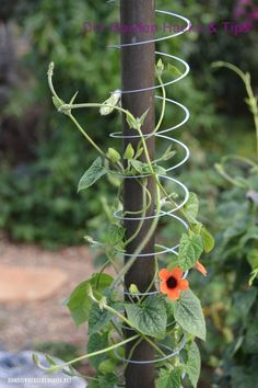 Slinky Hack and Trellis for a Favorite Flowering Vine Slinky Hack and Tr. Slinky Hack and Trellis for a Favorite Flowering Vine Slinky Hack and Trellis for a Favorit Garden Yard Ideas, Garden Crafts, Lawn And Garden, Spring Garden, Garden Projects, Garden Art, Art Crafts, Easy Garden, Backyard Ideas