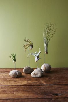10 DIY Air Plant Holders For Your Home Tillandsia or commonly known as air plants are a type of plants that get their nutrients from the air. Air Plant Display, Plant Decor, Plant Wall, Ikebana, Air Plants, Indoor Plants, Indoor Cactus, Green Plants, Plantas Indoor