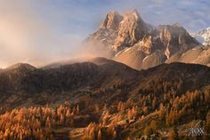 Golden Touch by Enrico Fossati