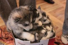 sibes 'n a box - where can I get a couple boxes of these!?  squeeeeee!~