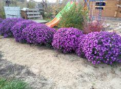 Milyen növényeket is ültessünk a kertünkbe. Dream Garden, Home And Garden, Evil Anime, The Flowers Of Evil, Hanging Baskets, Shade Garden, Container Gardening, Perennials, Flora
