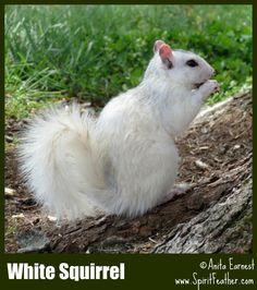 White squirrel, Etowah where I live. outside of Hendersonville, NC