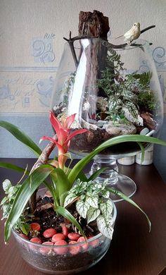 IMG_20160407_131311 Terrarium, Home Decor, Garden, Floral Arrangements, Terrariums, Decoration Home, Room Decor, Home Interior Design, Home Decoration
