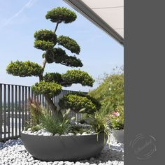 Keep your large plants and trees happy in this asian inspired fiber cement planter. For the garden who needs containers simple but full of class, consider this Swiss made planter. Tree Planters, Cement Planters, Garden Planters, Planter Pots, Planter Ideas, Modern Landscaping, Outdoor Landscaping, Outdoor Gardens, Concrete Bowl