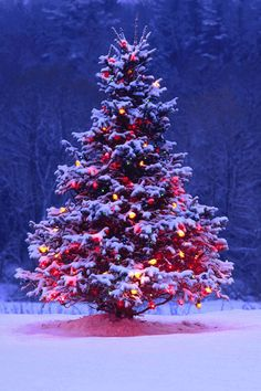 Outdoor Christmas Tree with lights and snow.