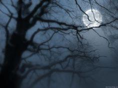 Moon through the trees.
