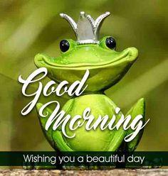 Cute frog good morning image HD Beautiful Good Morning Wishes, Cute Good Morning Images, Good Morning Images Flowers, Latest Good Morning, Good Morning Gif, Morning Pictures, Good Morning Quotes, Beautiful Day, Inspirational Good Morning Messages