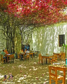 The courtyard of the Graphic Arts Institute courtyard, Oaxaca (Mexico). More photos of colorful Oaxaca: http://bbqboy.net/photo-essay-the-colors-of-oaxaca/  #oaxaca #mexico