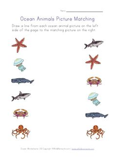 Ocean animals worksheets