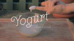 Typographies et recettes de cuisine
