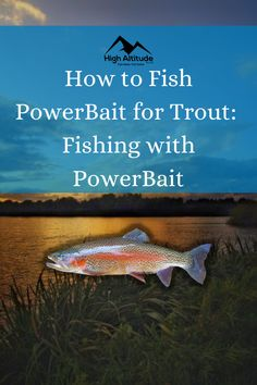 Fishing for trout can be a challenge if you don't know the best tips and techniques. One of the most effective fishing techniques is using PowerBait when you trout fish. PowerBait is a dough-like substance that comes in a variety of colors and scents. Best Fishing, Fishing Tips, Fishing Techniques, Trout Fishing, Challenges, Colors, Colour, Color, Paint Colors