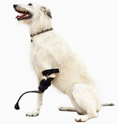Animal Prosthetics Help Human Amputees Move Again | Wired Magazine | Wired.com