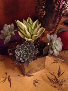 GCFSMex: #conceptonatura #jardinesconintencion, Monica Koppel diseño y concepto, . Zamora 132, col. Condesa, Mex DF 52560199. Www.fengshui-monicakoppel.com.mx