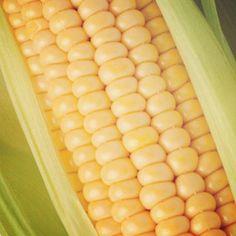 El maíz contiene luteína y la zeaxantina, pigmentos que al consumirlos regularmente reducen el riesgo de #cataratas en las mujeres.#Tip #ClínicaDeEspecialidadesOftalmológicas