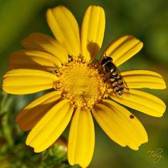 On yellow flower (1): Photo by Photographer Tibi Galambos - photo.net
