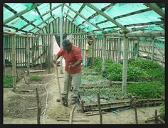 Bamboo greenhouse structure...