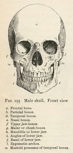 Vintage Anatomy Clip Art - Bones & Skull - Halloween - The Graphics Fairy