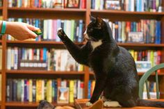 The best way to train your adventure cat is through clicker training. It's easy to clicker train a cat if you follow this method.