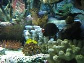 One of the gorgeous coral reef displays