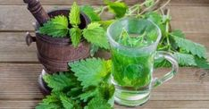 This article will tell you all about the health benefits of nettle and how to use it.Nettle (Urtica dioica) is a wild medicinal plant found in wet climates. Nettle Tea Benefits, Health Benefits, Natural Treatments, Natural Remedies, Holistic Remedies, Detox Tee, Medicinal Weeds, Gastro, Green Smoothies