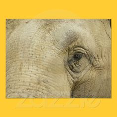 Elephant Eye Closeup Poster from Zazzle.com