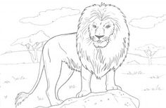 Black And White Lion Coloring Pages Animal African Page