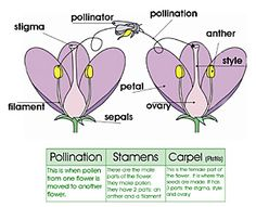 Label the Flower Matching Game - free by 1+1+1=1