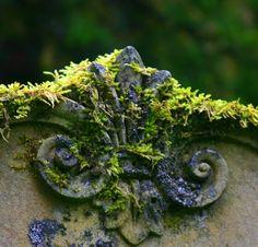 garden0fsecrets:  Cathcart 08070715 (by Gertie_DU)