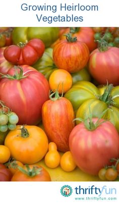 This is a guide about growing heirloom vegetables. Growing heirloom vegetable gives you the opportunity to collect your own seeds for next year's garden.