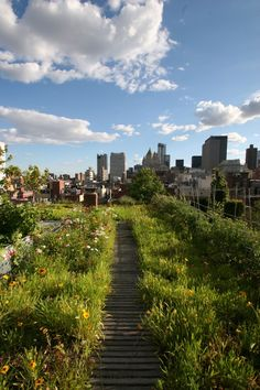 This photo by Lisa J. Goode shows a New York City Goode Green rooftop. Goode Green brings an alternative perspective to green roofs and landscaped roofs. Creating habitats and mitigating storm water or just a few of the benefits of these rooftop gardens!