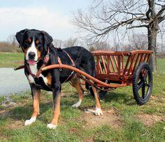 Art Beagle, Beagle Puppy, Calm Dog Breeds, Dog Friends, Best Friends, Swiss Mountain Dogs, Purebred Dogs, Big Dogs, Pets