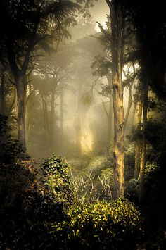 ~~A foggy afternoon in Pena ~ misty forest, Sintra, Portugal by *Ahmad Kavousian*~~