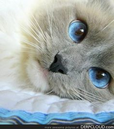 How Beautiful!  Look @ those eyes....