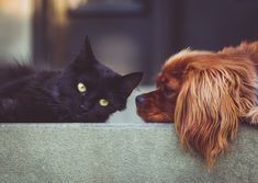 – Your Pets Deserve The Best - Our Pet Shop is carrying all kinds of clothes for your dog or cat. Humane Society, Cavalier King Charles Spaniel, Sick Dog, Owning A Cat, Cat People, Tier Fotos, Pet Accessories, Pets, Dog Breeds