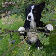Happy National Dog's Day...New in the life of Asha...!