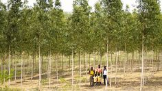 Micro-forestry provides a way to re-green the land and provide a profit to poor families at the same time.