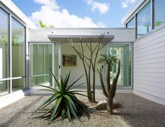 Modern Florida seaside home with PGT industries sliding doors and aloe and madacascar palms with James Hardie building products siding in the courtyard