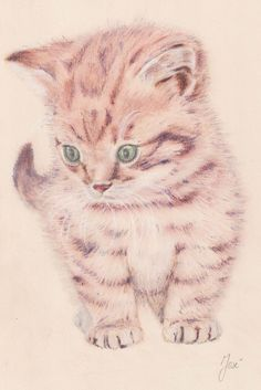 Little pussycat; drawing with pastel pencils on mi teintes light yellow paper (size Pastel Pencils, Yellow Paper, Pastel Drawing, Paper Size, Animal Drawings, A4, Animals, Size Of Paper, Animales