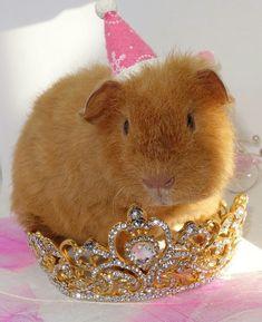 Nikita dans ça couronne de princesse.
