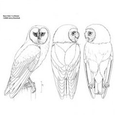 Free Wood Spirit Patterns | Owl, Barn (1/2 life size), Jerry Simchuk Pattern