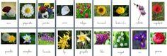 Et des cartes sur les fleurs... (nomenclatures à télécharger)
